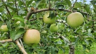りんご王国青森県に行ってきた